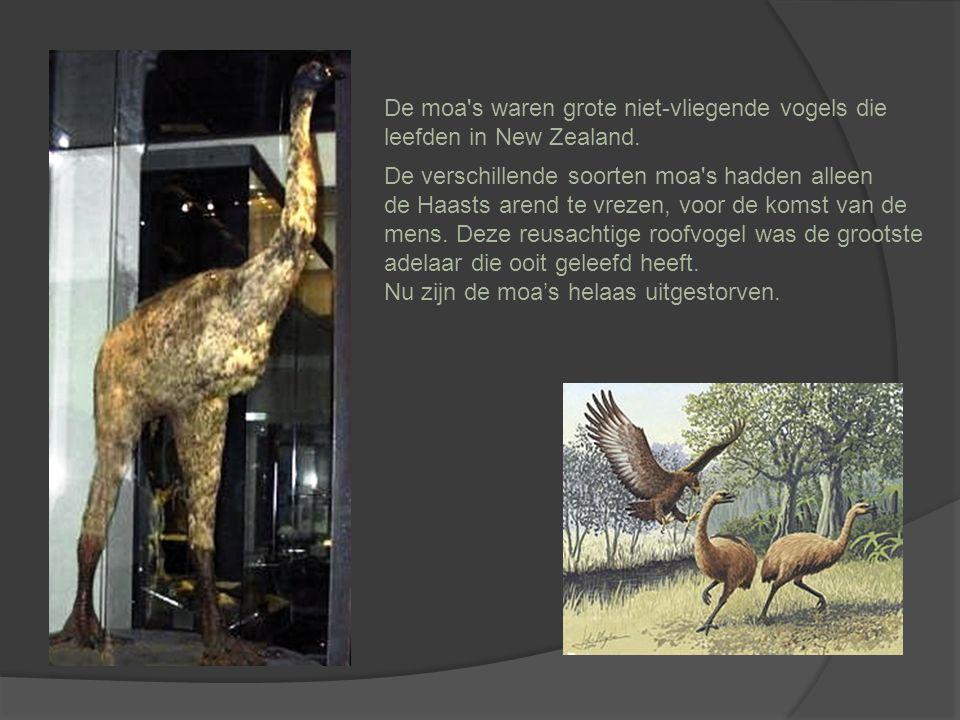 De moa s waren grote niet-vliegende vogels die leefden in New Zealand.