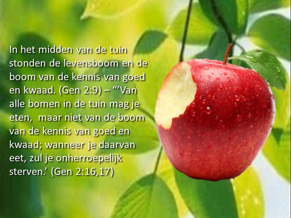 """In het midden van de tuin stonden de levensboom en de boom van de kennis van goed en kwaad. (Gen 2:9) – """"'Van alle bomen in de tuin mag je eten, maar"""
