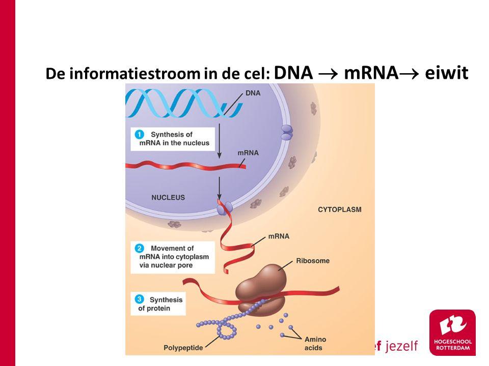 De informatiestroom in de cel: DNA  mRNA  eiwit