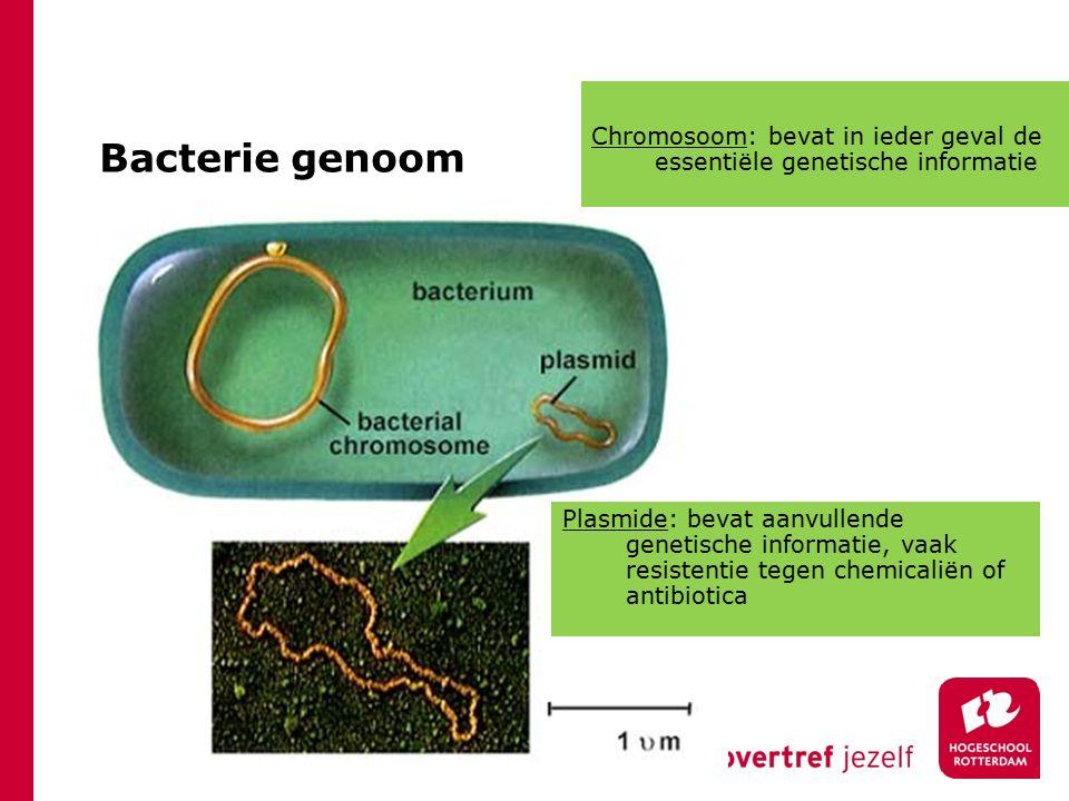 Bacterie genoom Plasmide: bevat aanvullende genetische informatie, vaak resistentie tegen chemicaliën of antibiotica Chromosoom: bevat in ieder geval