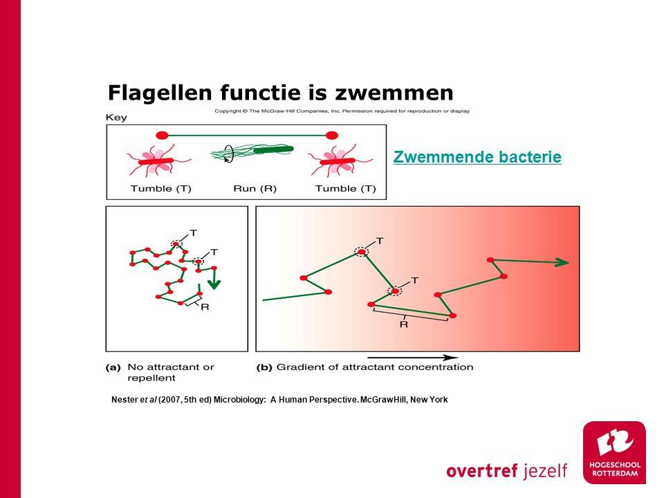 Flagellen functie is zwemmen HLO BML Nester et al (2007, 5th ed) Microbiology: A Human Perspective. McGrawHill, New York Zwemmende bacterie