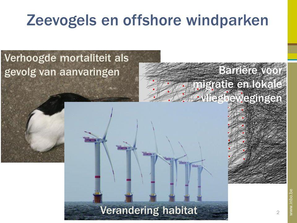 Zeevogels en offshore windparken 2 Barrière voor migratie en lokale vliegbewegingen Verandering habitat Verhoogde mortaliteit als gevolg van aanvaringen