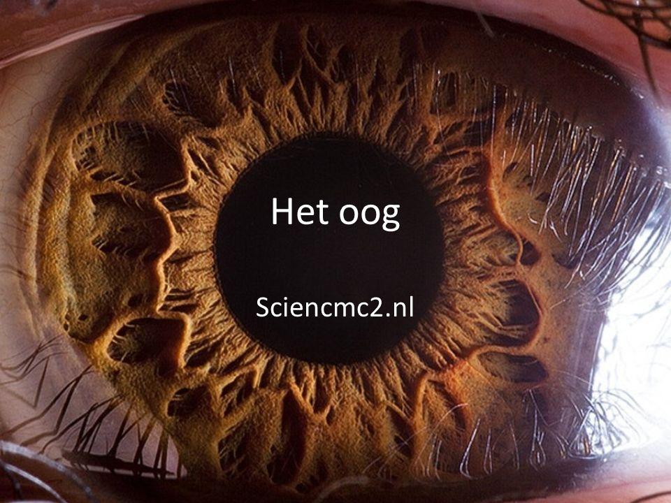 Samenvatting Onderdelen van het oog – Met functie van aantal onderdelen Accommoderen – Platter of boller maken om op verschillende afstanden scherp te zien Oogafwijkingen en correctie – Bijziend, verziend en oudzien Sterkte van een lens – Sterkte in dioptrie, f in meter