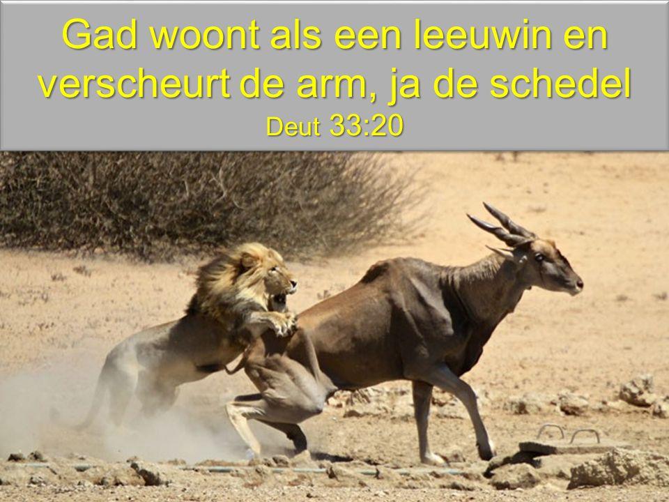 Gad woont als een leeuwin en verscheurt de arm, ja de schedel Deut 33:20
