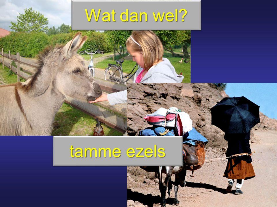 Wat dan wel? tamme ezels