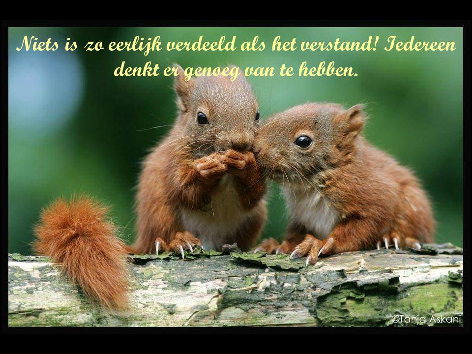 Niets is zo eerlijk verdeeld als het verstand! Iedereen denkt er genoeg van te hebben.