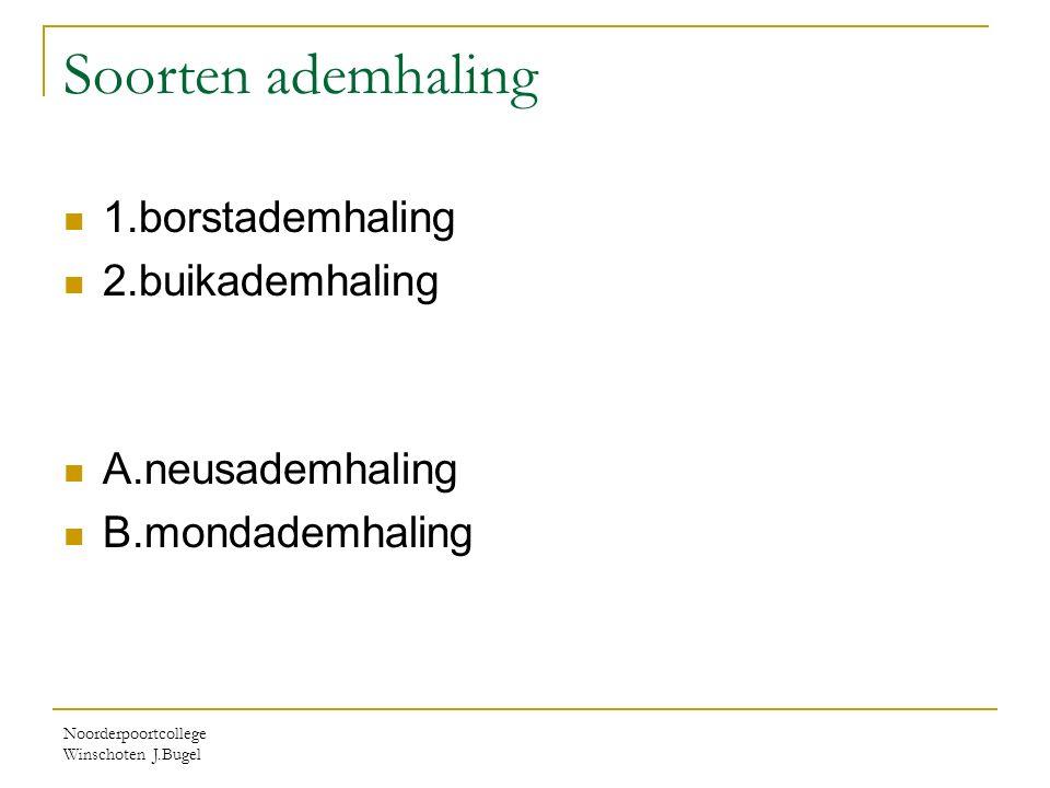 Noorderpoortcollege Winschoten J.Bugel Soorten ademhaling 1.borstademhaling 2.buikademhaling A.neusademhaling B.mondademhaling