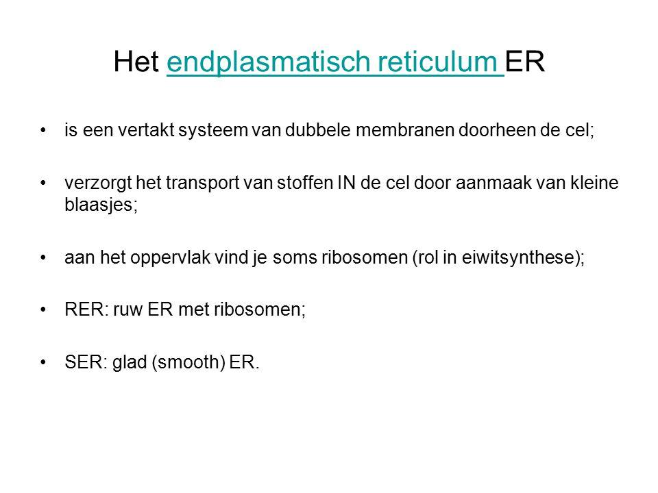 Het endplasmatisch reticulum ERendplasmatisch reticulum is een vertakt systeem van dubbele membranen doorheen de cel; verzorgt het transport van stoffen IN de cel door aanmaak van kleine blaasjes; aan het oppervlak vind je soms ribosomen (rol in eiwitsynthese); RER: ruw ER met ribosomen; SER: glad (smooth) ER.