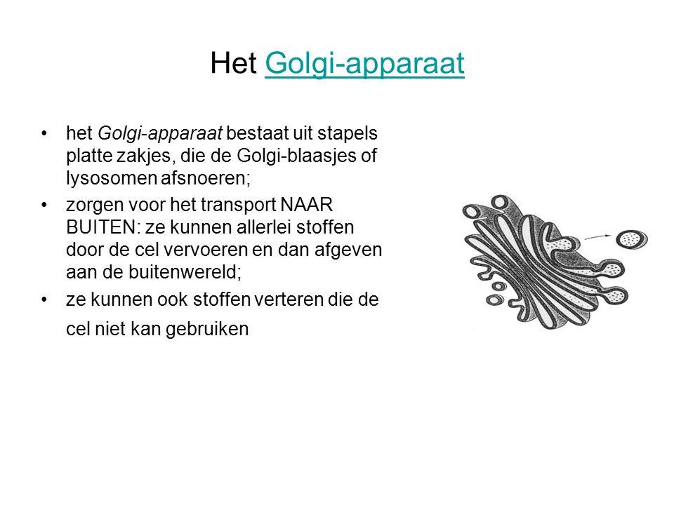 Het Golgi-apparaatGolgi-apparaat het Golgi-apparaat bestaat uit stapels platte zakjes, die de Golgi-blaasjes of lysosomen afsnoeren; zorgen voor het transport NAAR BUITEN: ze kunnen allerlei stoffen door de cel vervoeren en dan afgeven aan de buitenwereld; ze kunnen ook stoffen verteren die de cel niet kan gebruiken