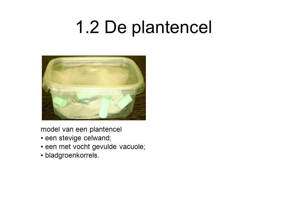 1.2 De plantencel model van een plantencel een stevige celwand; een met vocht gevulde vacuole; bladgroenkorrels.