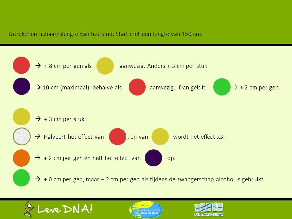  + 10 cm (maximaal), behalve als aanwezig. Dan geldt:  + 2 cm per gen Uitrekenen lichaamslengte van het kind: Start met een lengte van 150 cm.  + 8