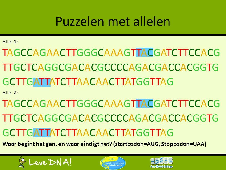 Puzzelen met allelen Allel 1: TAGCCAGAACTTGGGCAAAGTTACGATCTTCCACG TTGCTCAGGCGACACGCCCCAGACGACCACGGTG GCTTGATTATCTTAACAACTTATGGTTAG Allel 2: TAGCCAGAAC