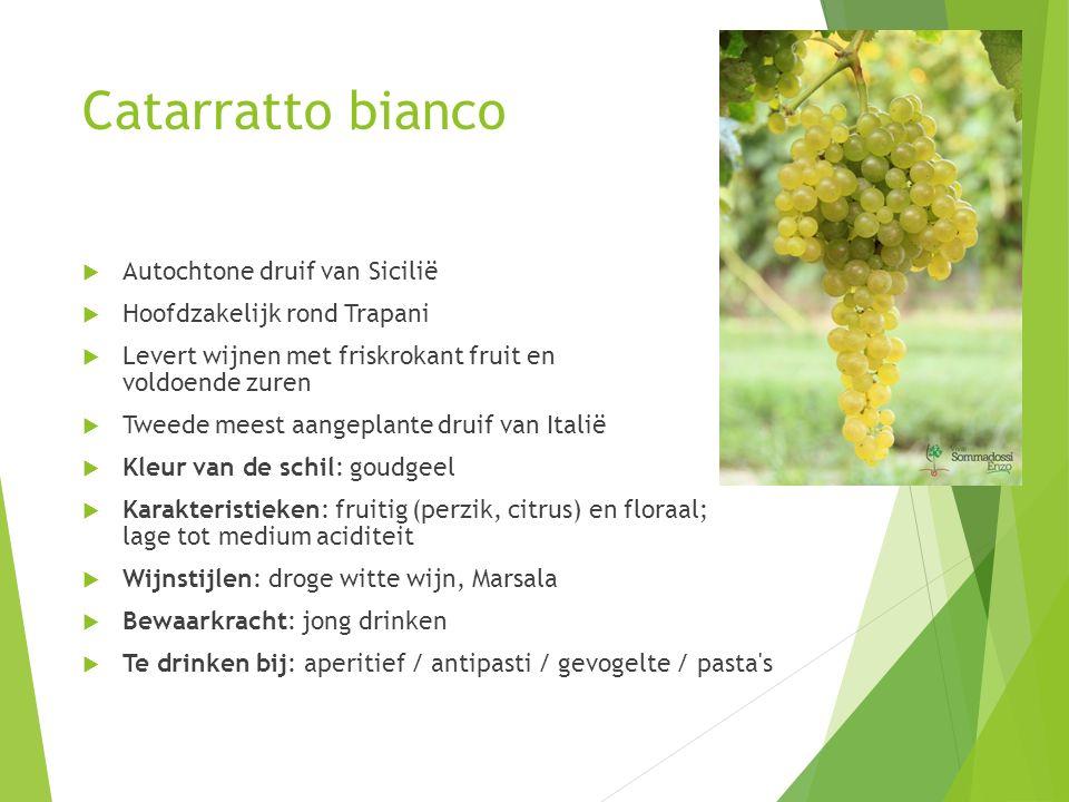 Catarratto bianco  Autochtone druif van Sicilië  Hoofdzakelijk rond Trapani  Levert wijnen met friskrokant fruit en voldoende zuren  Tweede meest aangeplante druif van Italië  Kleur van de schil: goudgeel  Karakteristieken: fruitig (perzik, citrus) en floraal; lage tot medium aciditeit  Wijnstijlen: droge witte wijn, Marsala  Bewaarkracht: jong drinken  Te drinken bij: aperitief / antipasti / gevogelte / pasta s