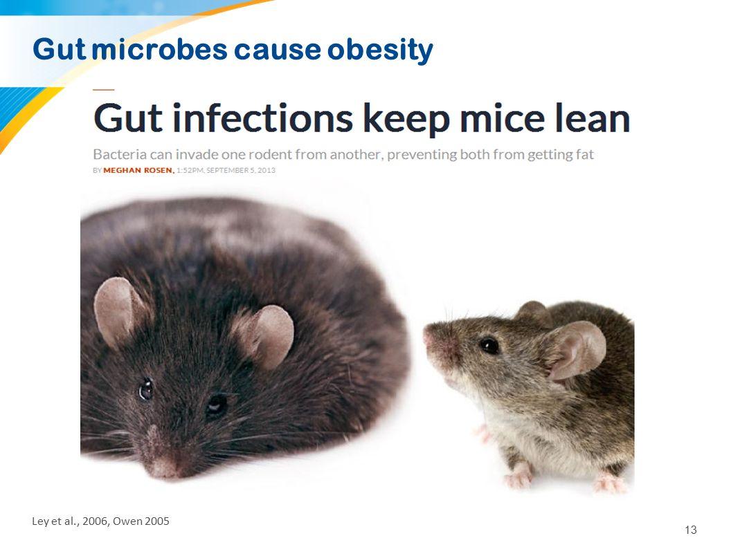 13 Ley et al., 2006, Owen 2005 Gut microbes cause obesity