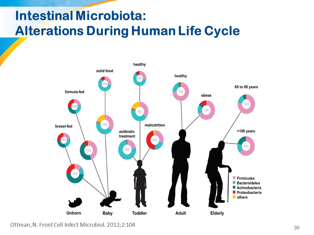 30 Intestinal Microbiota: Alterations During Human Life Cycle Ottman, N. Front Cell Infect Microbiol. 2012;2:104