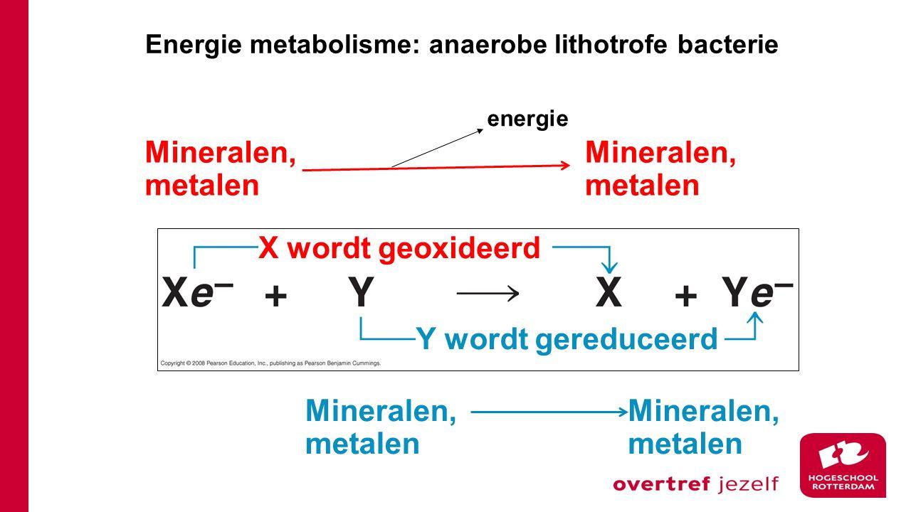 Energie metabolisme: anaerobe lithotrofe bacterie X wordt geoxideerd Mineralen, metalen Mineralen, metalen Mineralen, metalen Mineralen, metalen energ