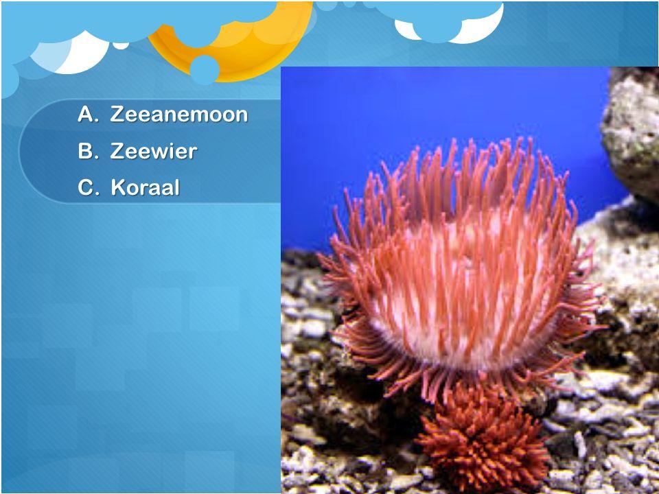A.Zeeanemoon B.Zeewier C.Koraal