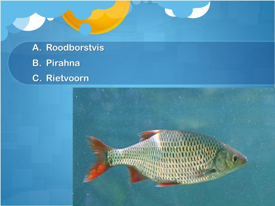 A.Roodborstvis B.Pirahna C.Rietvoorn