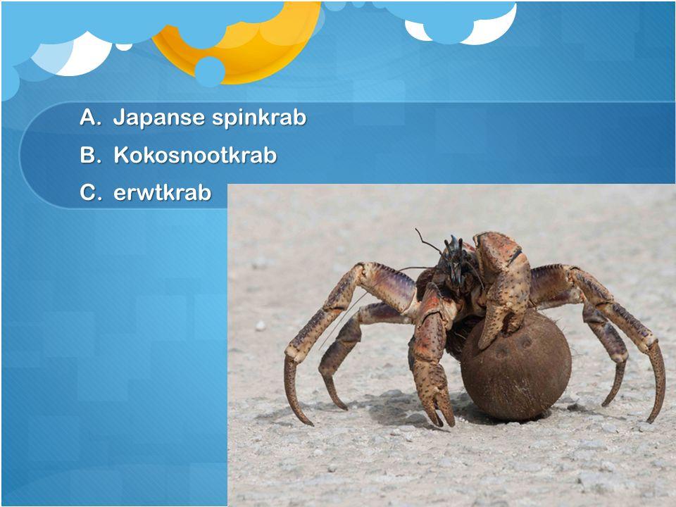 A.Japanse spinkrab B.Kokosnootkrab C.erwtkrab