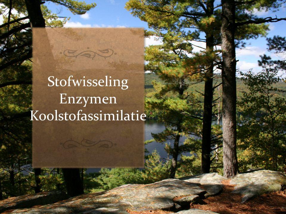 Stofwisseling Enzymen Koolstofassimilatie