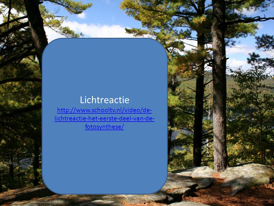 Lichtreactie http://www.schooltv.nl/video/de- lichtreactie-het-eerste-deel-van-de- fotosynthese/