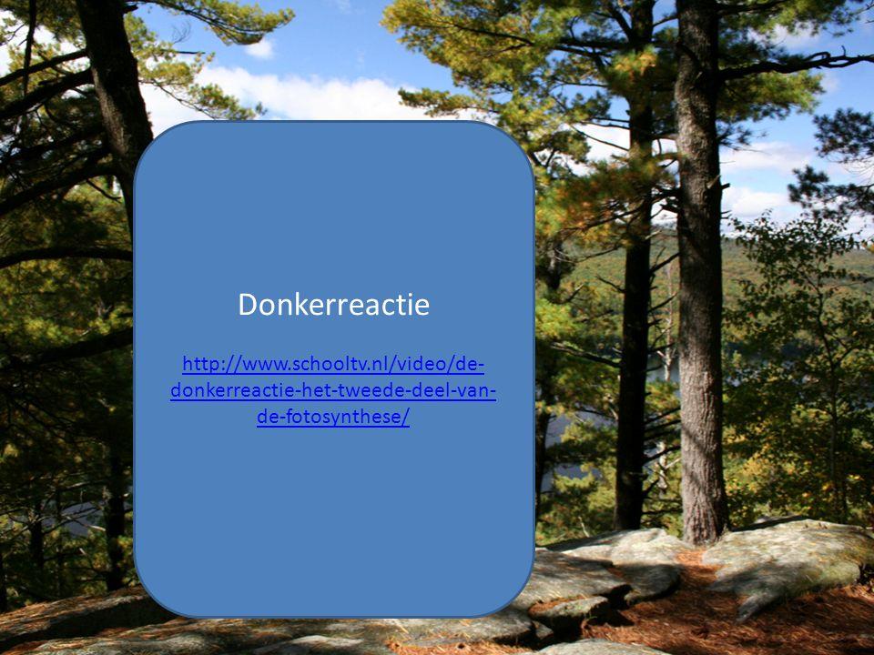 Donkerreactie http://www.schooltv.nl/video/de- donkerreactie-het-tweede-deel-van- de-fotosynthese/