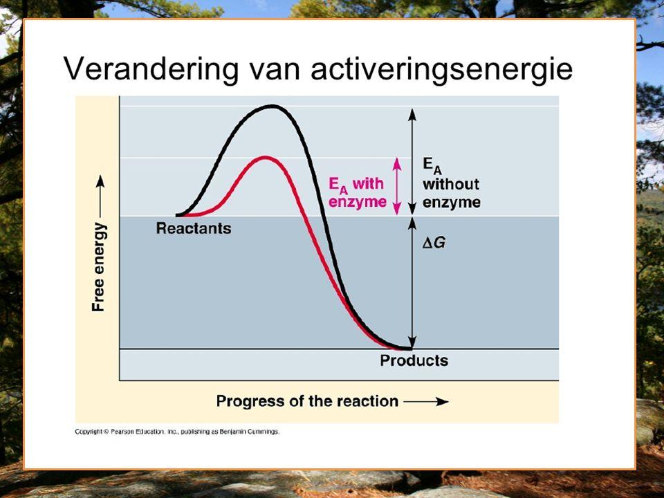 Donkerreactie/calvincyclus/ lichtonafhankelijke reactie