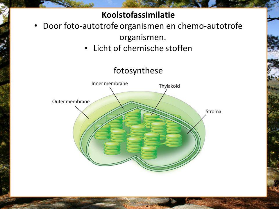 Koolstofassimilatie Door foto-autotrofe organismen en chemo-autotrofe organismen. Licht of chemische stoffen fotosynthese