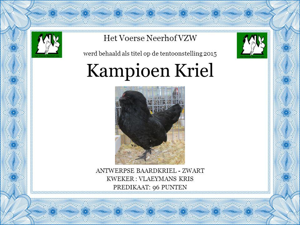 Het Voerse Neerhof VZW ANTWERPSE BAARDKRIEL - ZWART KWEKER : VLAEYMANS KRIS PREDIKAAT: 96 PUNTEN Kampioen Kriel werd behaald als titel op de tentoonstelling 2015