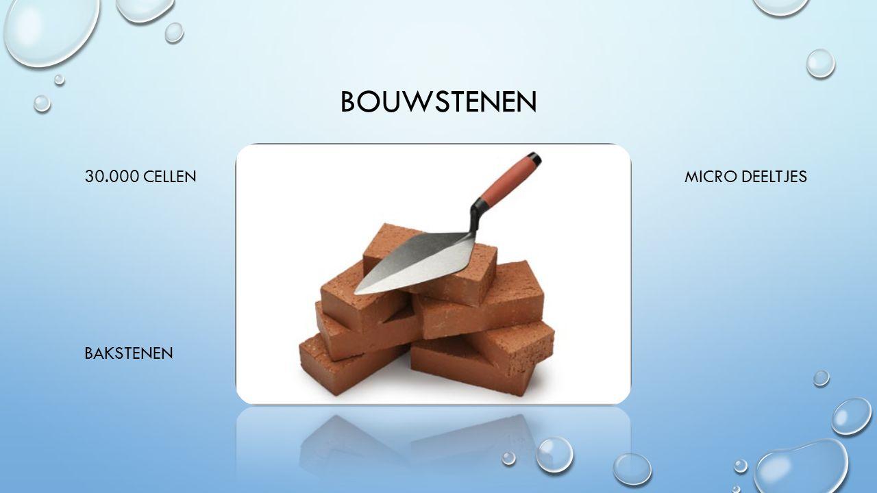 INLEIDING 1.BOUWSTENEN 2.BLAUWE PLEKKEN EN WONDJES 3.VINGERAFDRUKKEN 4.QUIZ