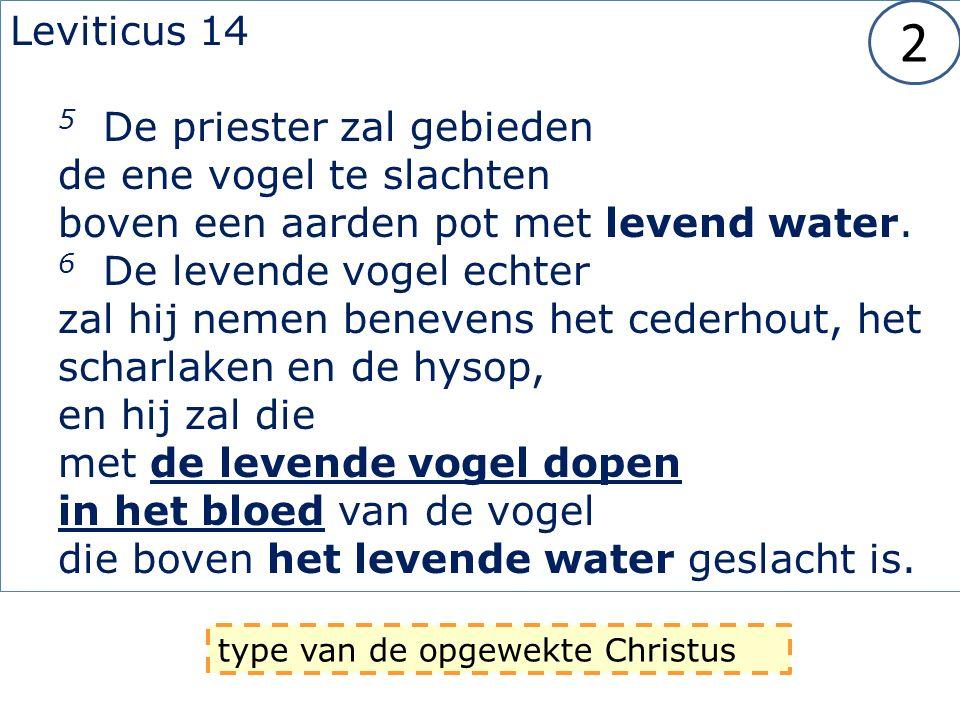 Leviticus 14 5 De priester zal gebieden de ene vogel te slachten boven een aarden pot met levend water.