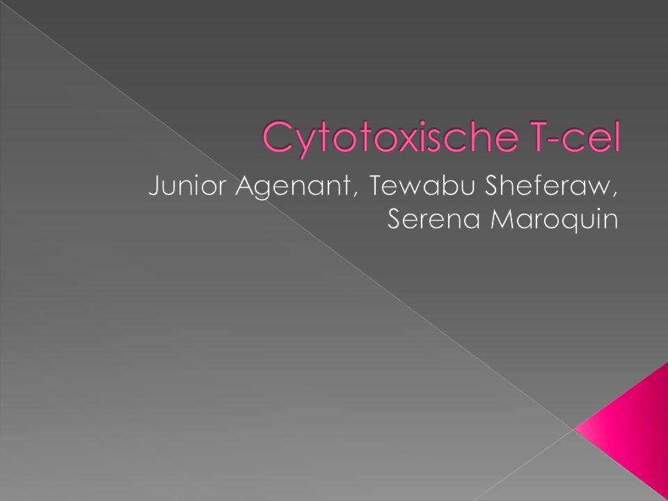  Cytotoxische T-cellen in je lichaam  De functie  MHC-I  De rol van Cytotoxische T-cellen bij immuniteit  Verschillende cytotoxische T-cellen  Herkennen van ziektverwekkers  Het opruimen van ziekteverwekkers  HIV bij het voorkomen dat besmette cellen worden vernietigd