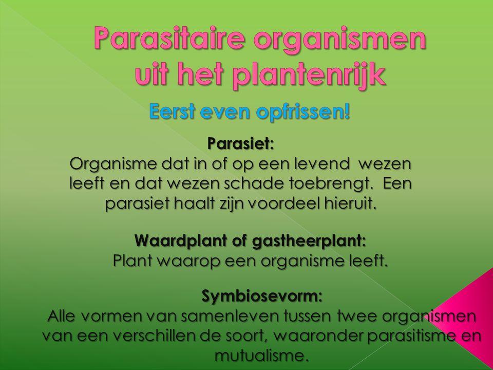 Parasiet: Organisme dat in of op een levend wezen leeft en dat wezen schade toebrengt. Een parasiet haalt zijn voordeel hieruit. Waardplant of gasthee