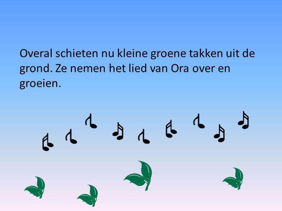 Overal schieten nu kleine groene takken uit de grond. Ze nemen het lied van Ora over en groeien.