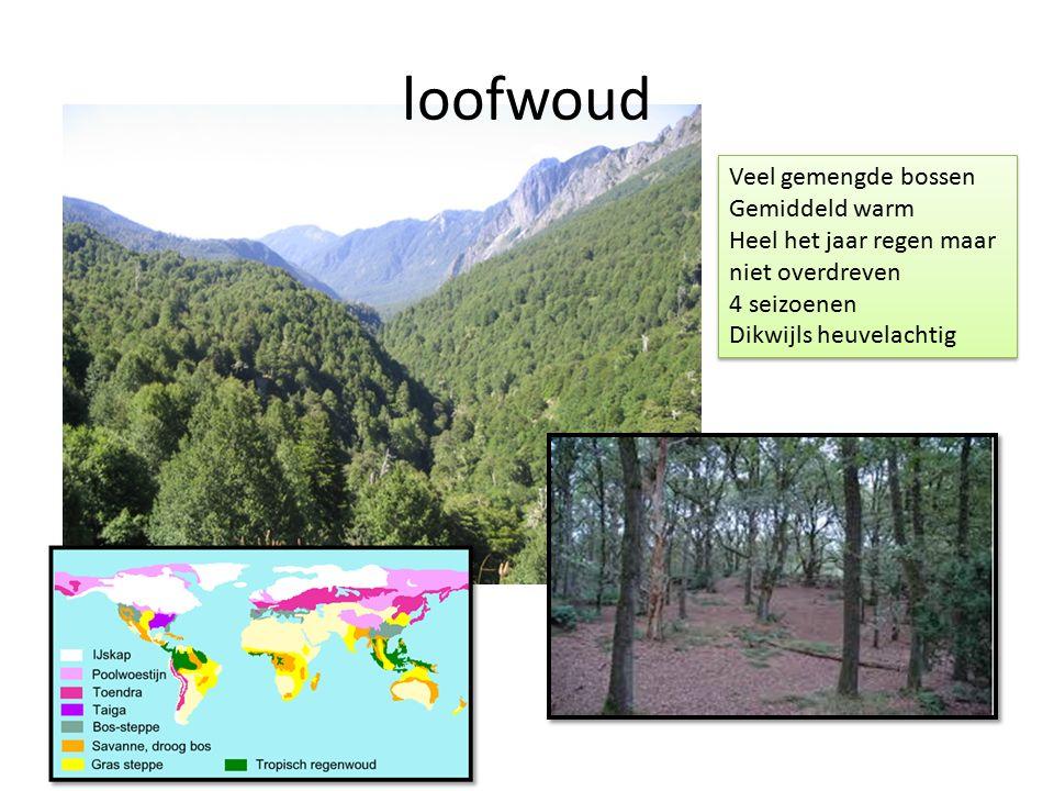 loofwoud Veel gemengde bossen Gemiddeld warm Heel het jaar regen maar niet overdreven 4 seizoenen Dikwijls heuvelachtig Veel gemengde bossen Gemiddeld