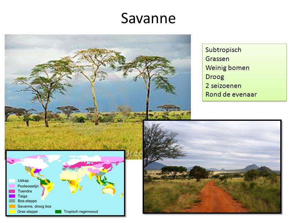 Savanne Subtropisch Grassen Weinig bomen Droog 2 seizoenen Rond de evenaar Subtropisch Grassen Weinig bomen Droog 2 seizoenen Rond de evenaar
