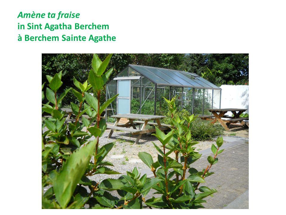 Jardin de la rue Gray Tuin van de Graystraat Etterbeek