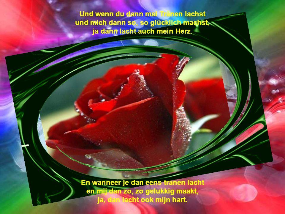 Rot, rot, rot, rot sind die Rosen. Rosen so schön wie unsre Liebe. Rood, rood, rood, rood zijn de rozen. Rozen zo mooi als onze liefde.