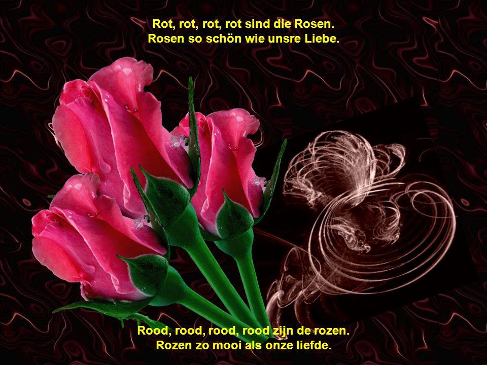 Rot, rot, rot, rot sind die Rosen.Rosen so schön wie unsre Liebe.