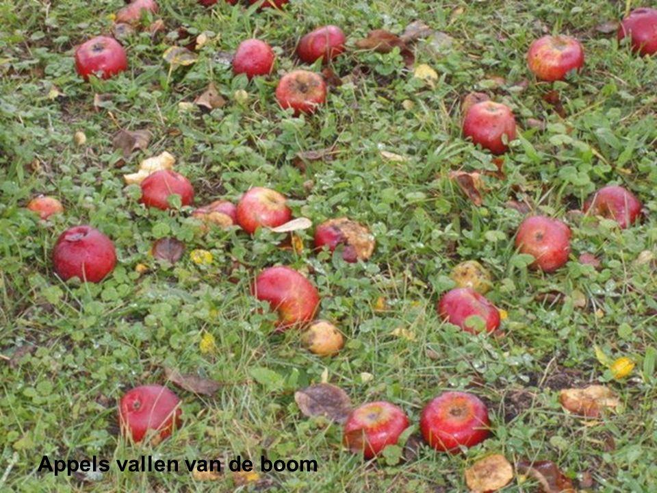 Appels vallen van de boom