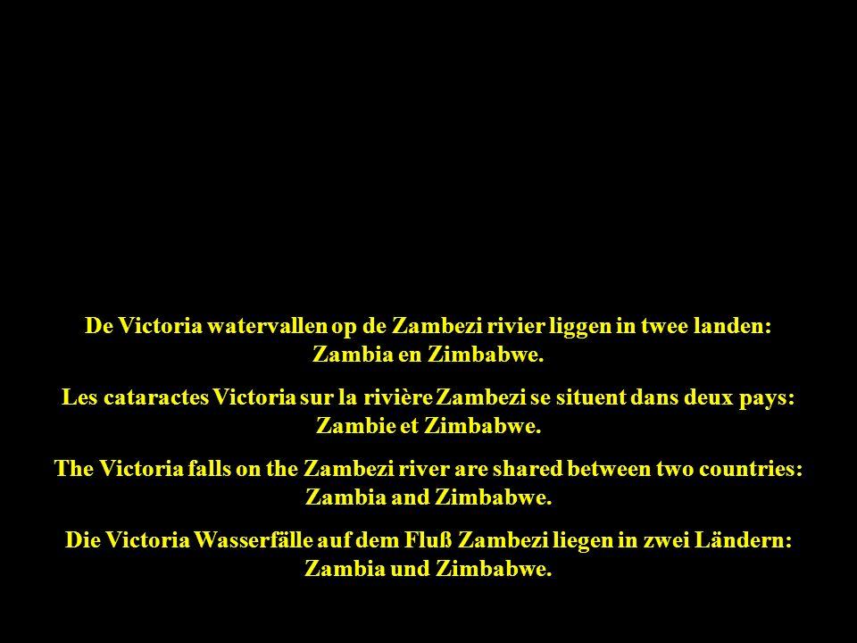 De Victoria watervallen zijn 1,7 km breed en tot 108 m hoog: het grootste gordijn vallend water ter wereld ! Les cataractes Victoria sont 1,7 km de la