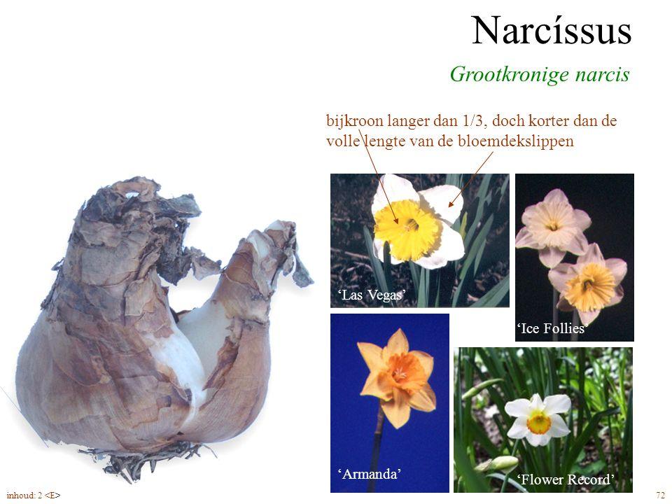 Narcíssus grootkronig bloeitijd vanaf begin april hoogte tot 35 – 40 cm Grootkronige narcis Narcíssus bijkroon langer dan 1/3, doch korter dan de volle lengte van de bloemdekslippen 'Las Vegas' 'Flower Record' 'Ice Follies' 'Armanda' 'Carlton' inhoud: 2 72