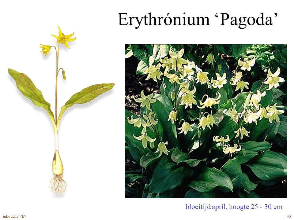 Erythrónium 'Pagoda' bloeitijd april, hoogte 25 - 30 cm inhoud: 2 43