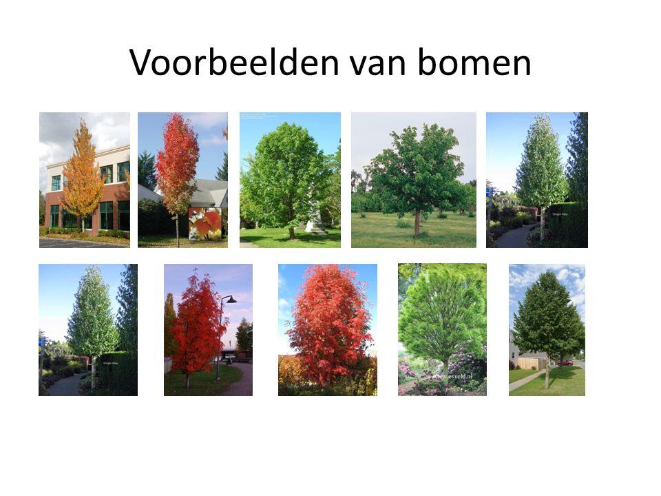 Voorbeelden van bomen