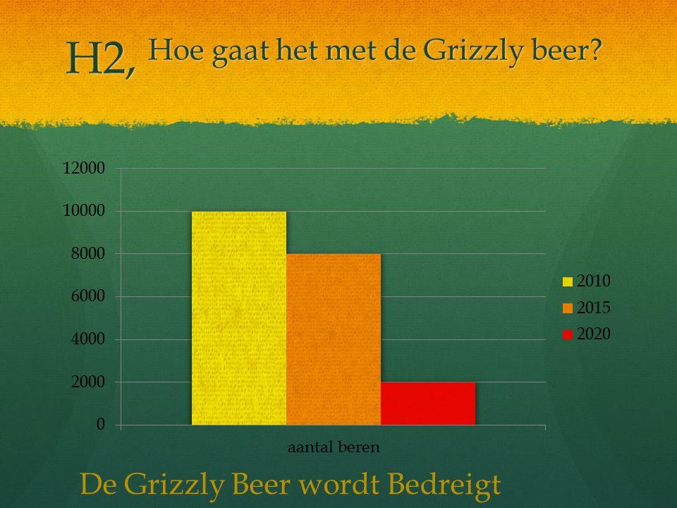 H2, Hoe gaat het met de Grizzly beer? De Grizzly Beer wordt Bedreigt