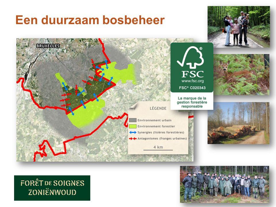 Een duurzaam bosbeheer