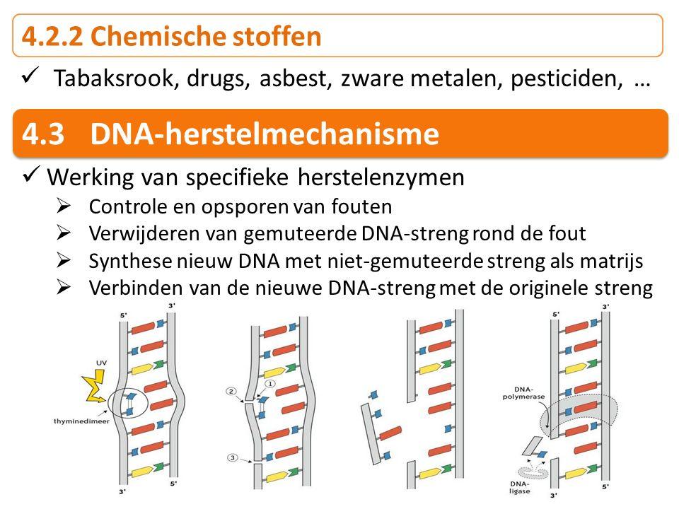 4.2.2 Chemische stoffen Tabaksrook, drugs, asbest, zware metalen, pesticiden, … 4.3DNA-herstelmechanisme Werking van specifieke herstelenzymen  Contr