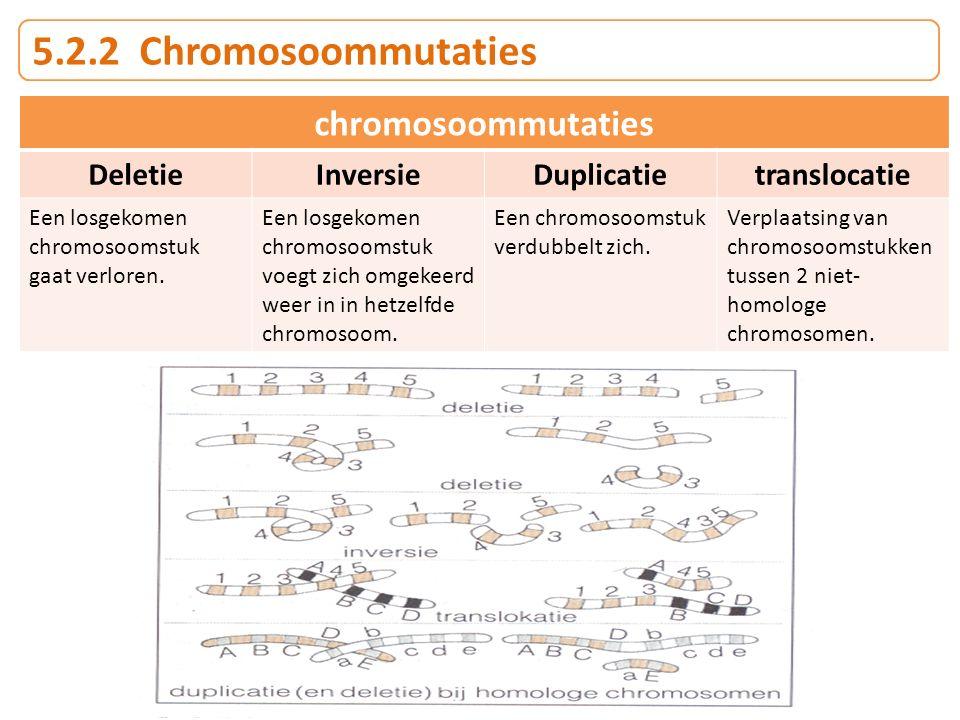 5.2.2 Chromosoommutaties chromosoommutaties DeletieInversieDuplicatietranslocatie Een losgekomen chromosoomstuk gaat verloren. Een losgekomen chromoso