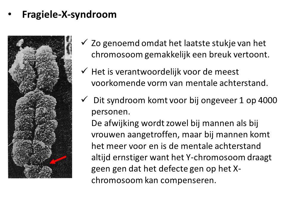 Zo genoemd omdat het laatste stukje van het chromosoom gemakkelijk een breuk vertoont. Het is verantwoordelijk voor de meest voorkomende vorm van ment