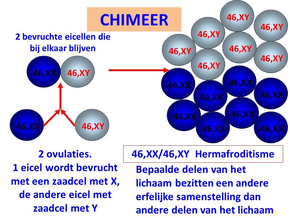 CHIMEER 46,XX/46,XY Hermafroditisme 46,XY 2 bevruchte eicellen die bij elkaar blijven 46,XY 46,XX 46,XY 2 ovulaties. 1 eicel wordt bevrucht met een za